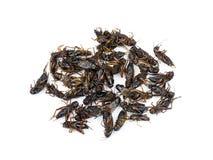油煎的昆虫 免版税库存图片