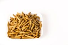 油煎的昆虫Molitors,富含蛋白质的食物 免版税图库摄影