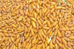 油煎的桑蚕蛹 库存照片
