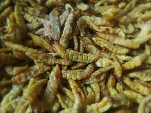 油煎的竹蠕虫 图库摄影
