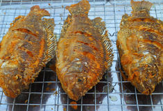 油煎的罗非鱼鱼 免版税库存图片