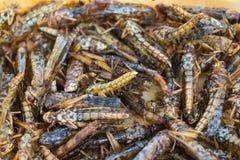 油煎的蚂蚱或蝗虫 库存照片