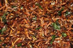 油煎的蝗虫 库存图片