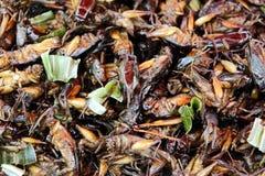 油煎的蟋蟀和蝗虫作为泰国的异乎寻常的快餐 免版税库存照片