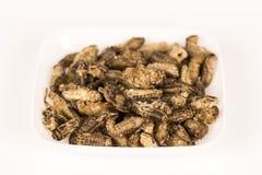 油煎的蟋蟀昆虫 免版税库存图片