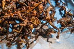 油煎的青蛙蟾蜍,在泰国的异乎寻常的食物东北部 免版税库存照片