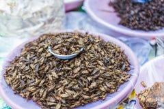 油煎的食物口味奇怪的昆虫 库存图片