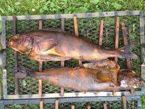 油煎的鱼 库存图片