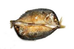 油煎的鲭鱼 图库摄影