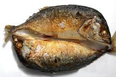 油煎的鲭鱼 库存照片