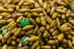 油煎的silkwarm蛹 库存图片