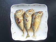 油煎食物是迫切的鲭鱼 库存图片