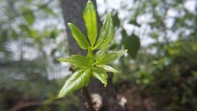 油腻的绿色叶子 免版税库存照片