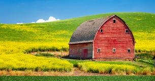 油菜和谷仓 库存照片