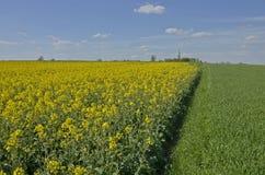 油菜和麦田在乡下 库存照片