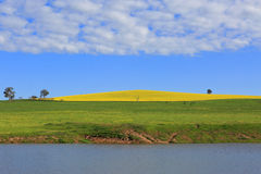 油菜小山和吃草牧场地 免版税库存图片