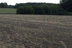 油菜植物的被收获的领域 库存照片