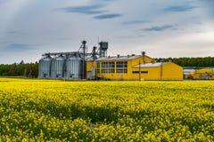 油菜籽、油菜菜子在芸苔napus在加工设备处理的和银色筒仓花的领域烘干的 图库摄影