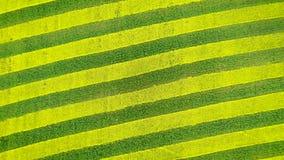 油菜籽和麦子黄色和绿线的自转在农业领域 股票视频