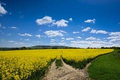 油菜籽在滚动的苏克塞斯乡下 库存图片