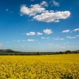 油菜籽在滚动的苏克塞斯乡下 免版税库存照片