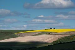 油菜籽在滚动的苏克塞斯乡下 免版税库存图片