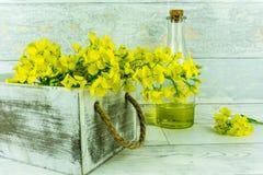 油菜籽开花与一个瓶菜子油 图库摄影