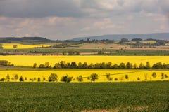 油菜籽的五颜六色的领域 在绽放的黄色领域强奸与蓝天和白色云彩 免版税库存照片