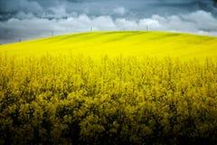 油菜籽的多小山领域 免版税图库摄影