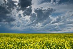 油菜籽的领域与大风雨如磐的天空的 免版税图库摄影