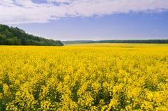 油菜籽的领域反对天空的与云彩 免版税库存照片