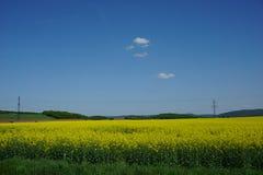 油菜籽领域农业,春天风景看法  免版税库存图片