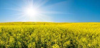 油菜籽领域和太阳在蓝天 免版税库存图片