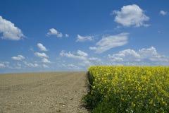 油菜籽领域和被耕的域 免版税库存照片