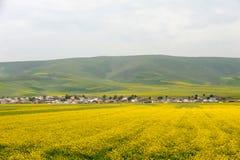 油菜籽领域的村庄 免版税库存照片