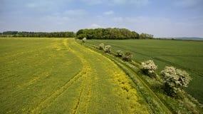 油菜籽,麦子农田夏天空中全景  库存图片