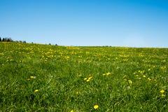 油菜籽黄绿色领域在春天,抽象自然eco季节性花卉背景 库存图片