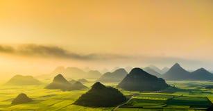 油菜花田在春天,罗平,中国 库存照片
