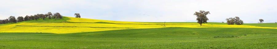 油菜领域和吃草牧场地 免版税库存图片