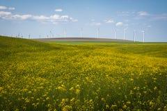 油菜领域和风轮机在一个夏天下覆盖 免版税库存图片