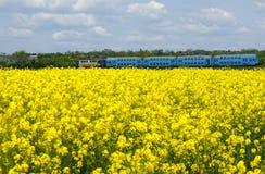 油菜领域在与通过在背景中的一列蓝色火车的一个明亮的晴朗的春日 库存图片