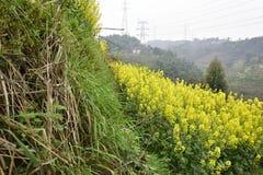 油菜领域在乡下 免版税库存图片