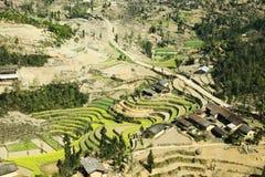 油菜领域在少数族裔村庄  免版税库存图片