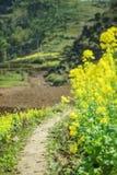 油菜领域风景 免版税图库摄影