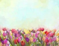 油画郁金香花在草甸 库存图片