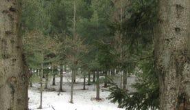 沼地在一个多雪的森林里 库存图片