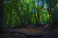 沼地在森林里 免版税库存图片
