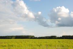 沼地木头 库存照片