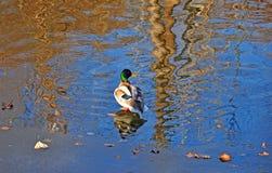 沼泽、运河和湖 库存图片