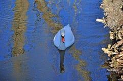 沼泽、运河和湖 免版税库存照片